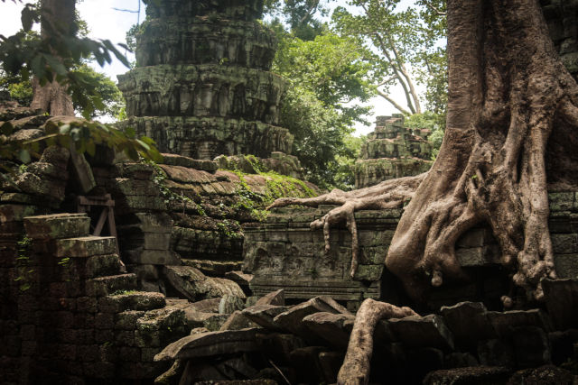 temple racines.