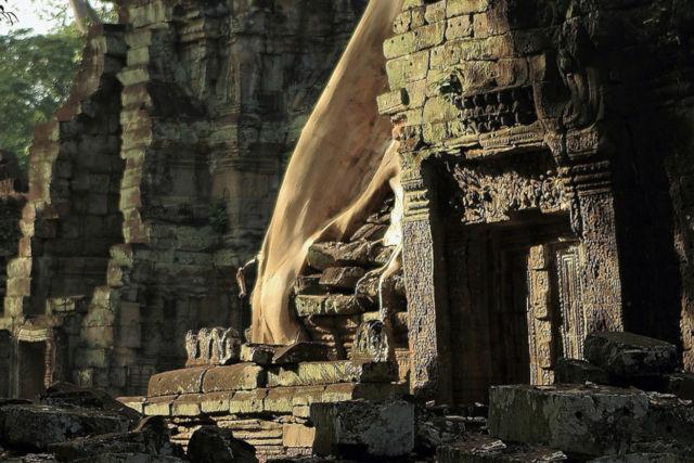 ruines temple arbres.