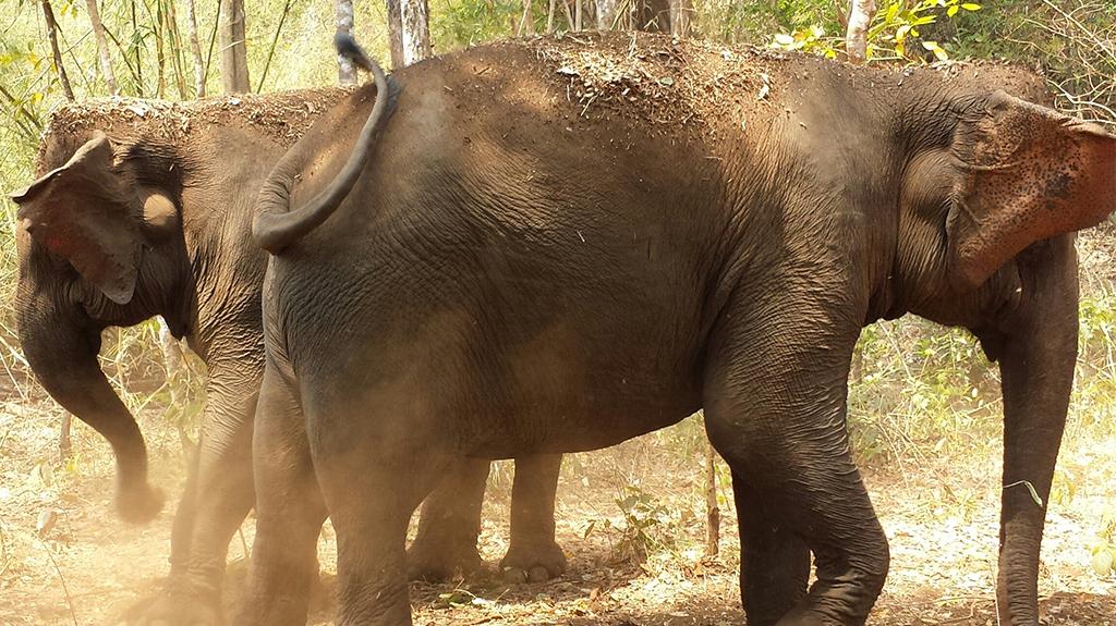A la découverte de la faune du Cambodge