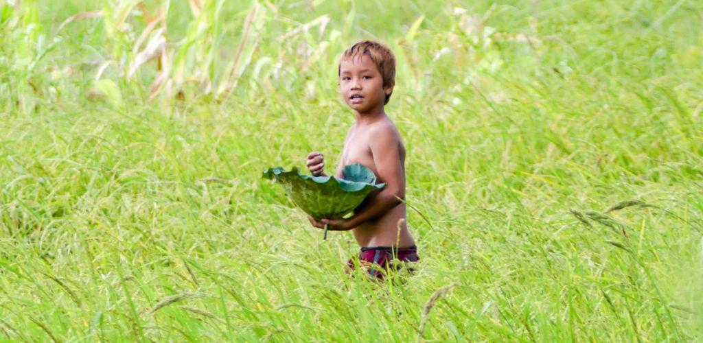 Enfant dans une rizière à Battambang au Cambodge.