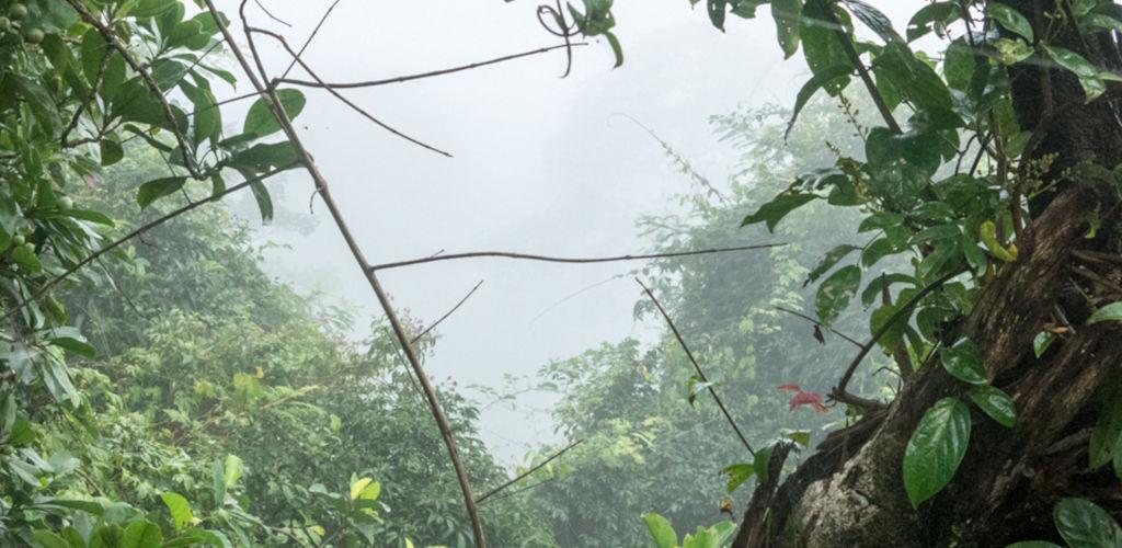 Jungle dans la chaîne des Cardamomes au Cambodge.