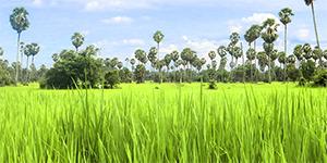 L'Ouest - Cambodge