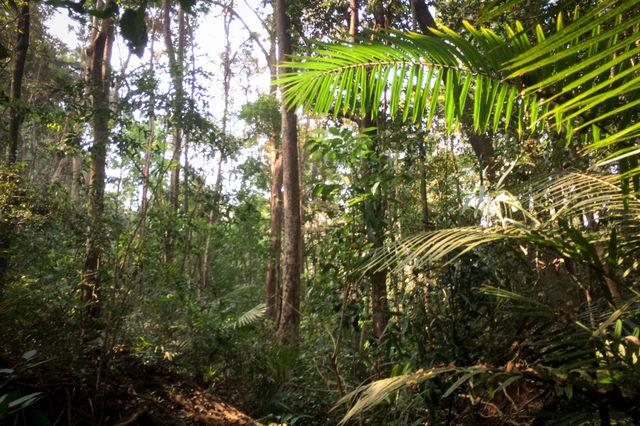 Jungle de la région de Mondolkiri au Cambodge.