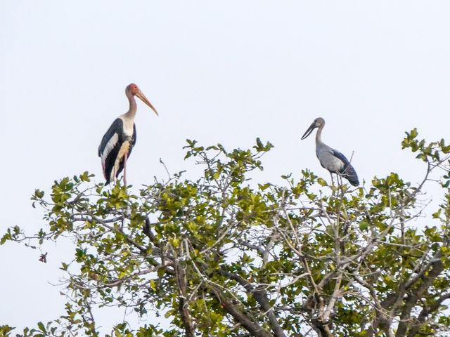La réserve ornithologique de Tonlé Sap au Cambodge.