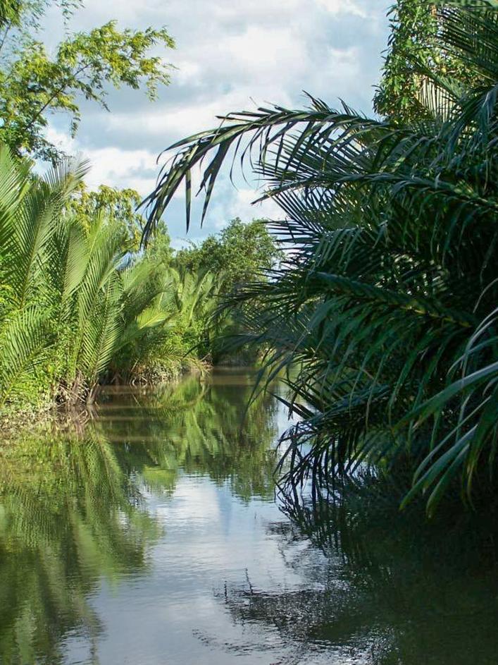 Végétation luxuriante Kampot